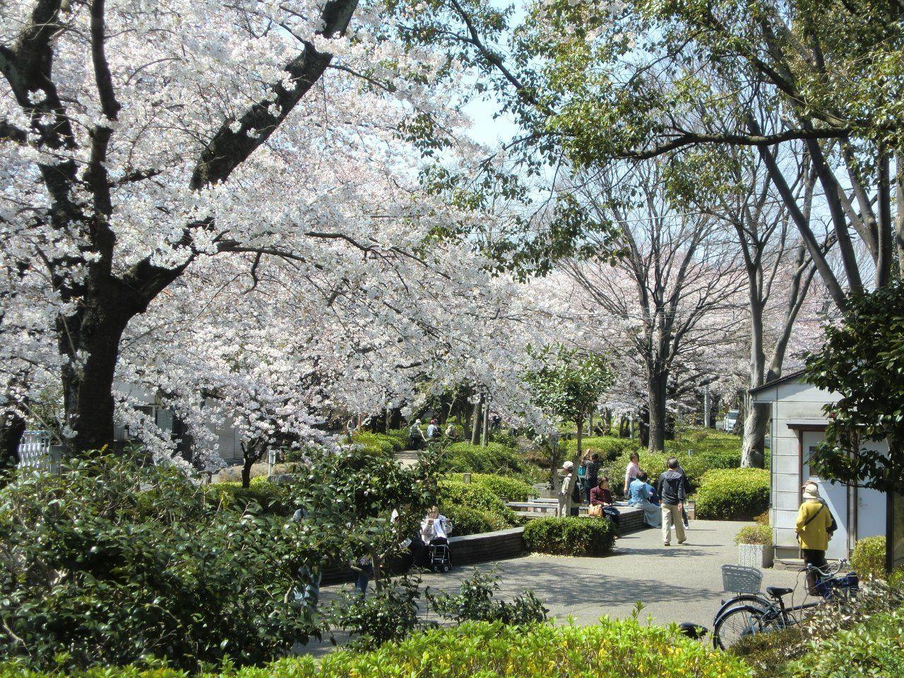 春は緑道に沿って桜がさきます。コーポよりやから503m